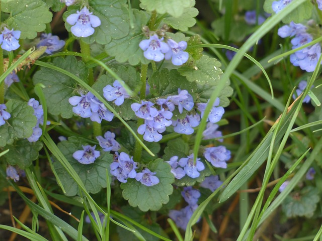 divoká květina