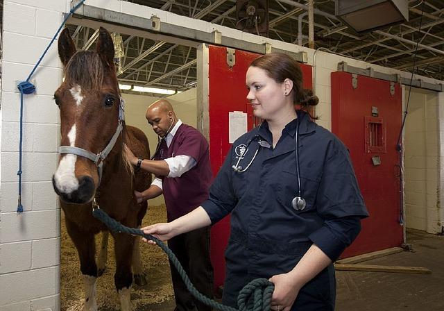 veterináři pro koně